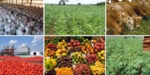 NIGERIA 300x150 AGRILOGISTICS   LINK