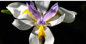 Schermata 2020 10 16 alle 12.04.12 300x155 African Flowers