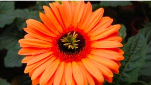 Schermata 2020 10 16 alle 12.04.34 300x169 African Flowers
