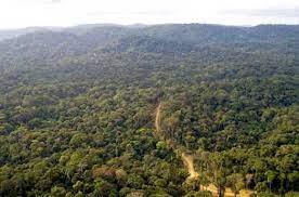 africa Deforestation in Africa