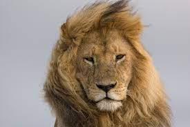crine World Lion Day