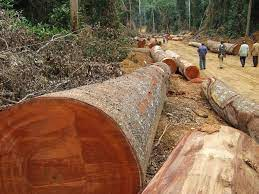 legname Deforestation in Africa