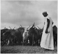 pastorizia Deforestation in Africa